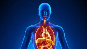 Mrekullitë shkencore në trupin e njeriut